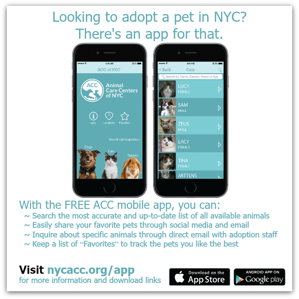 new app nycacc.org.png